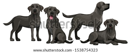 Black labrador retriever. Standing and sitting labradors isolated on white. The dog is lying. Young and friendly dogs. Foto stock ©