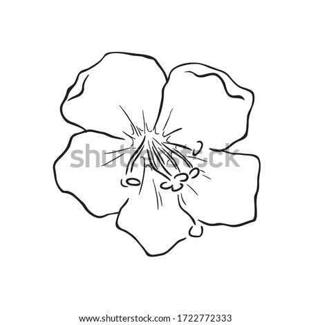 Black Line Art for Jacob's Ladder (Polemonium) Flower in Hand Drawing Vector Arts is a genus of between 25 and 40 species of flowering plants in the family Polemoniaceae