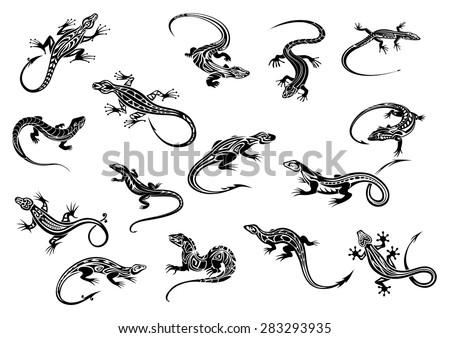 black lizards or geckos