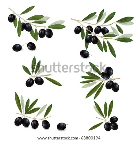 Black olive branch. Photo-realistic vector.
