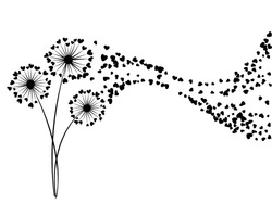 Black on white vector dandelion herbs, meadow flowers illustration. Floral background design with dandelion blowing plant. Flowers with heart shaped feather flying. Meadow blossom on white.