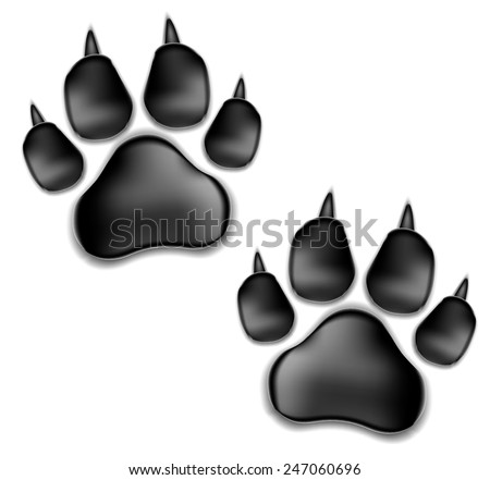 black pads of a cat with claws