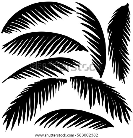 black palm leaves isolated on