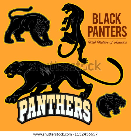 black panthers   vector set