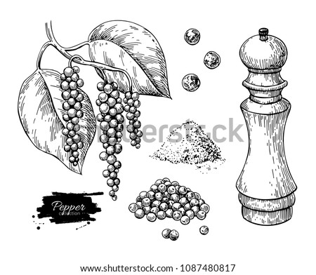 Black pepper vector drawing set. Peppercorn heap, mill, dryed seed, plant, grounded powder. Vintage hand drawn spice sketch. Herbal seasoning ingredient, culinary and cooking flavor.