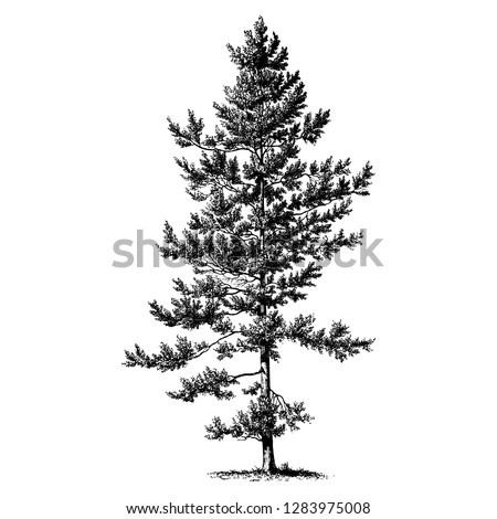 Black Pine Tree Vintage Illustrations