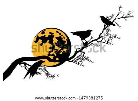 black raven birds sitting on
