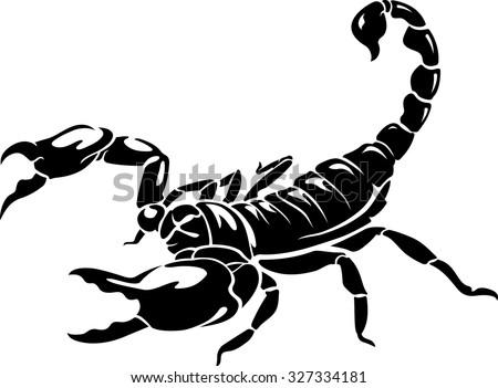 black scorpion isolated on