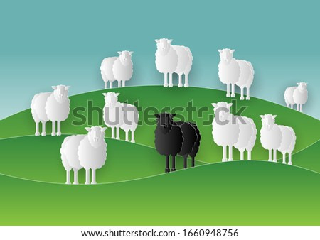 black sheep stand in middle of