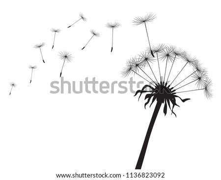 Black silhouette Dandelions on white background. Vector Illustration.