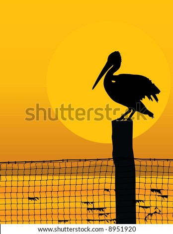 black silhouette of a pelican