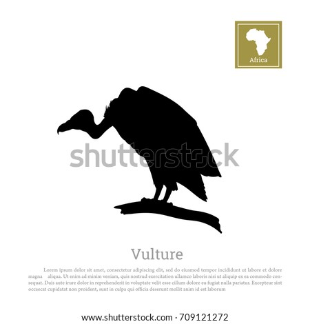 Black silhouette of a vulture on a white background. African animals. Vector illustration