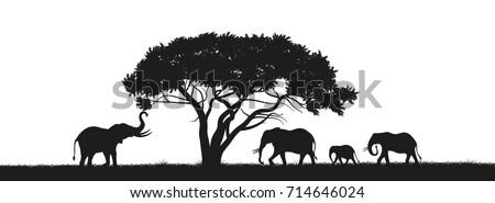 black silhouette of elephants