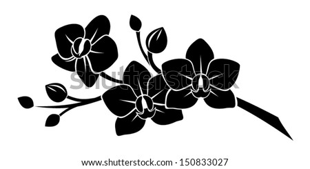 black silhouette of orchid