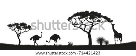 black silhouette of ostrich