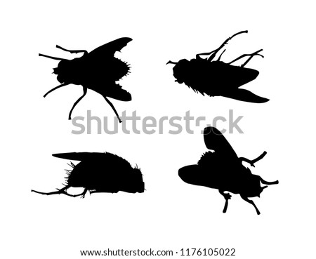 ec3387467c1f4 Black silhouettes of fly in different poses isolated on white background.  Insect. Vector realistic