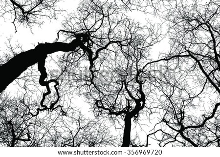black silhouettes of leafless