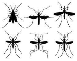 Black silhouettes of mosquito, vector illustration