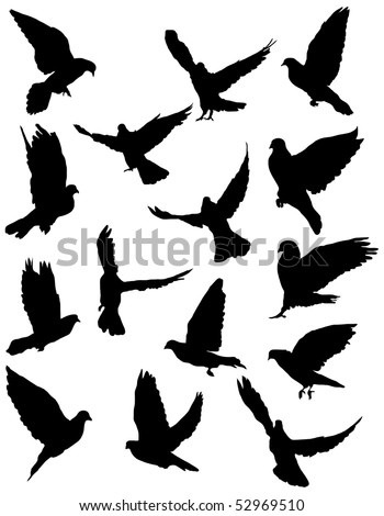 Black silhouettes of pigeon.  vector illustration