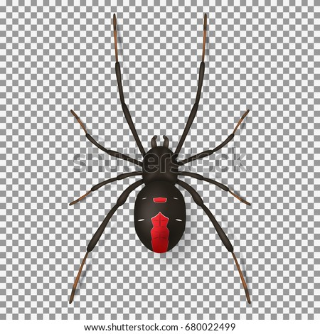 black spider isolated on...