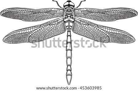 black steampunk dragonfly on