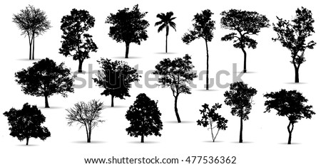 Black tree silhouettes on white background,silhouette of trees,Tree Branch,Silhouettes,tree on white background,Vector trees in silhouettes.    Set of abstract trees,tree with a realistic,black tree