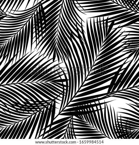 black tropical palm leaves