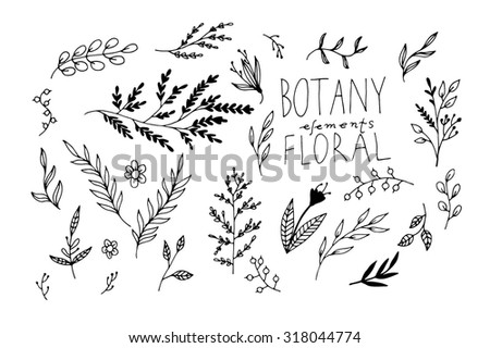 Black vector hand-drawn floral and botany elements #318044774