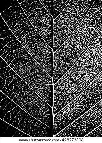 black white closeup leaf