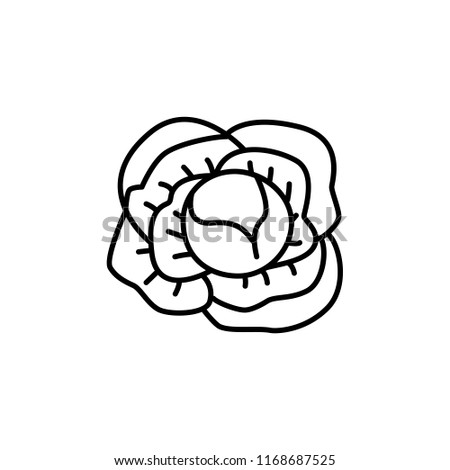 Black & white vector illustration of whole cabbage vegetable. Line icon of fresh organic headed cabbage. Vegan & vegetarian food. Health eating ingredient. Isolated object on white background.