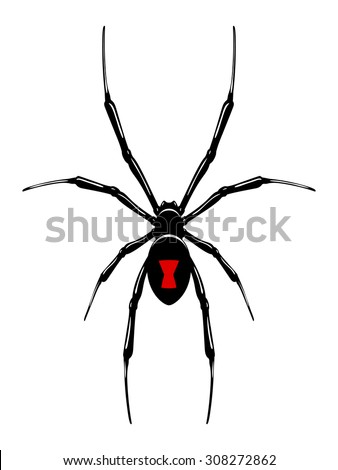 black widow spidervector