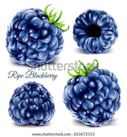 blackberries vector