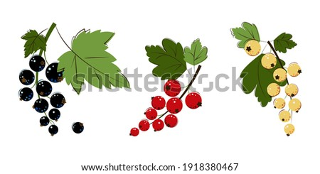 blackcurrant  red currant