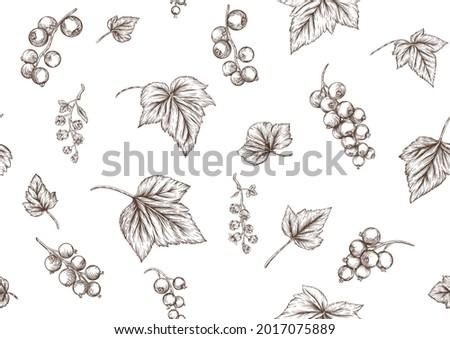 blackcurrant  redcurrant ripe