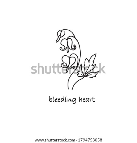 bleeding heart plant sketch