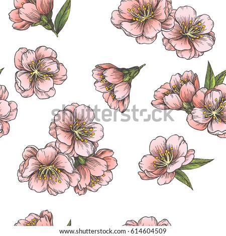 blooming almond vector