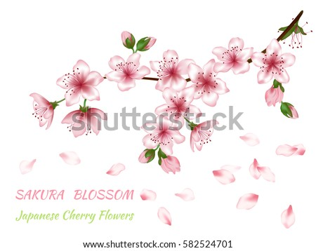 blooming branch vector with