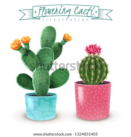 blooming cacti realistic set of