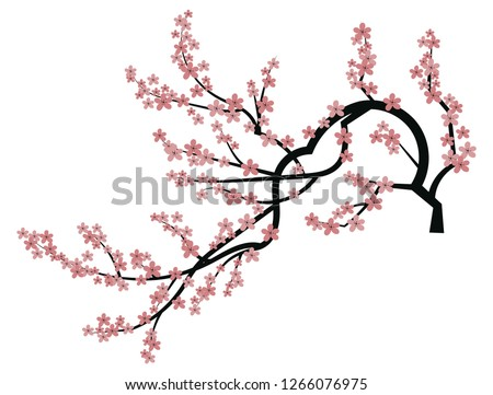 blooming cherry sakura branch