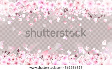 blooming cherry spring