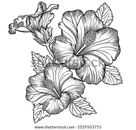 Blooming exotic flowers , detailed hand drawn vector illustration. Romantic decorative flower drawing in line art . All sketches objects isolated on white background. Vector sketch of blooming flowers