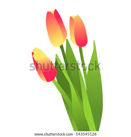 Blooming flowers, tulips