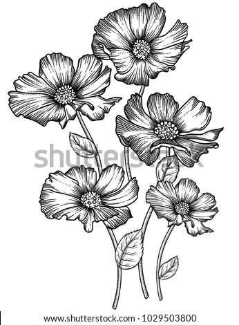 Blooming forest flowers , detailed hand drawn vector illustration. Romantic decorative flower drawing in line art . All sketches objects isolated on white background. Vector sketch of blooming flowers #1029503800
