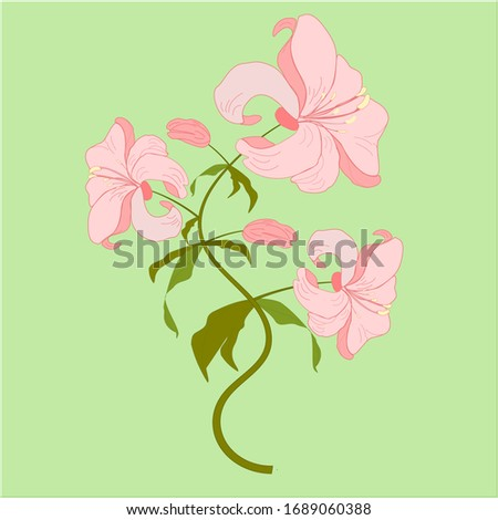 Blooming lily flowers. Floral postcard. Wedding elements. Colored silhouette isolated on green background. Vector illustration.