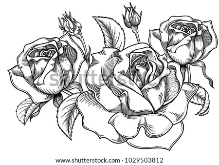 Rose flower vector background black and white download free vector blooming roses flowers detailed hand drawn vector illustration romantic decorative flower drawing all mightylinksfo