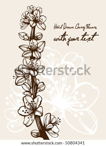 cherry blossom branch drawing. stock vector : Blossom cherry