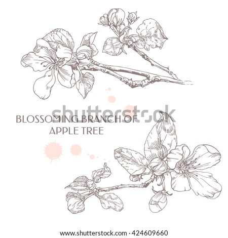 Blossoming branch of apple tree. Apple flower. Ink graphics.