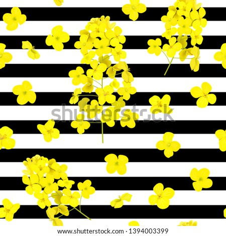 blossoming rapeseed flowers