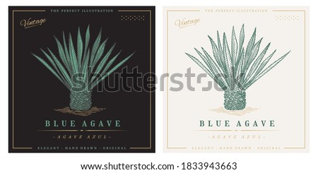 Blue agave azul vintage retro detailed engraved style illustration. Agave tequilana Foto stock ©