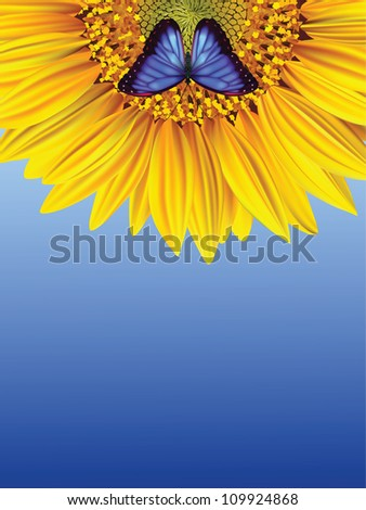 blue butterfly on a sunflower